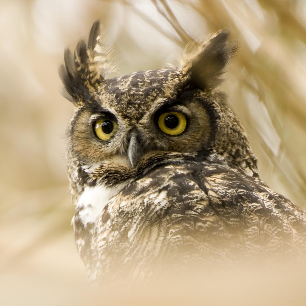 Wise Owl Cider Logo